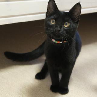 甘えん坊な黒猫くん