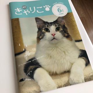 きゃりこ猫カフェカタログ2011年6月号