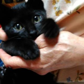 真っ黒子猫🎀男のコ