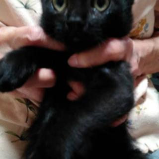 真っ黒子猫🎀男のコ   - 直方市