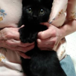真っ黒子猫🎀男のコ   - 猫