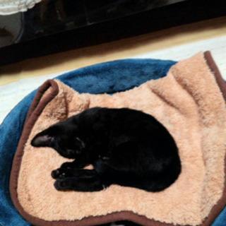 真っ黒子猫🎀男のコ   − 福岡県