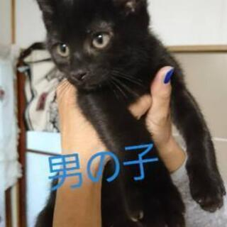 3ヶ月になる元野良猫ちゃん。