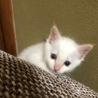 白猫ちゃん
