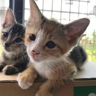 なつこい姉妹猫 2ヶ月