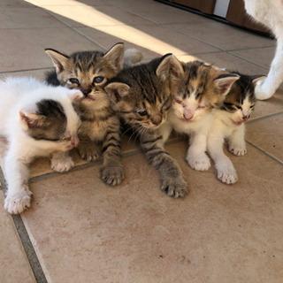 里親募集☆1ヶ月子猫 5匹