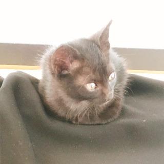 台風の前日に一人でいた2ヶ月程の黒仔猫(オス)
