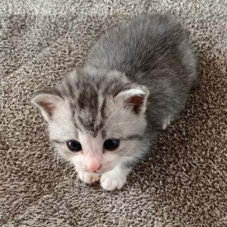 生後2週間ちょっとの子猫の里親募集