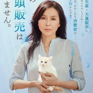 譲渡になりました⭐️⭐️ ありがとうございました🐶 - 猫