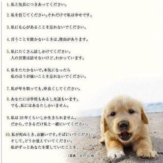 譲渡になりました⭐️⭐️ ありがとうございました🐶 − 長崎県