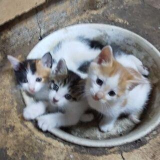 好奇心旺盛な3兄妹
