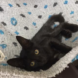ヤンチャ坊主の黒猫