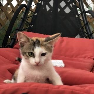 2ケ月女の子ルーシー - 猫