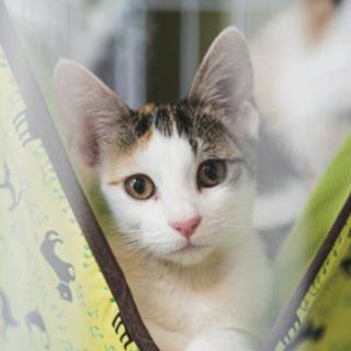 三毛猫メス六か月