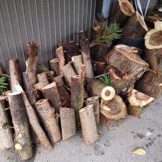 薪 杉の木