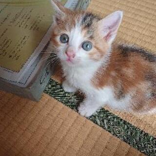 野良の仔猫生後一ヶ月過ぎ