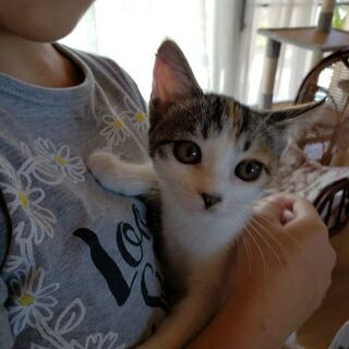 2ヶ月位の三毛猫ちゃん