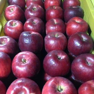 りんご 紅玉1kg〜 加工はもちろん生食も♪