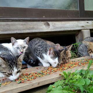かわいい子猫が6匹います。