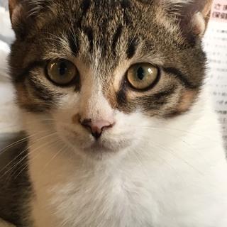 野良猫 キジトラ オス2匹 ハチワレ オス1匹 メス1匹