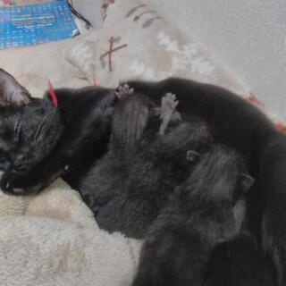 子猫3匹 里親募集