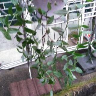 観葉植物、1