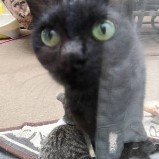 人懐こい、黒猫ちゃんです
