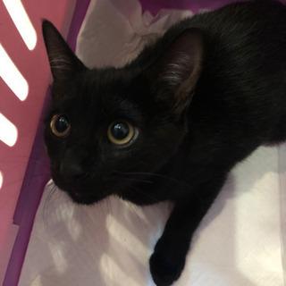 生後4ヶ月弱の黒猫ちゃんの里親さん募集します。
