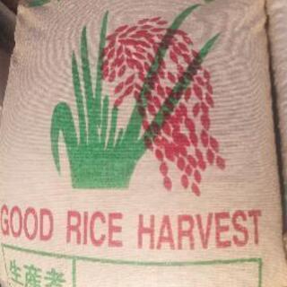 ✨本日限定✨新米ひのひかり籾32㎏