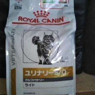猫のドライフード ロイヤルカナン