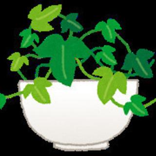 <急募>お庭の植栽、草刈り、手入れ、掃除など(シニアの方が活躍し...