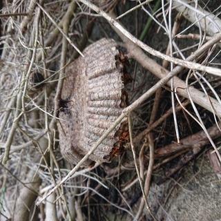 蜂の巣駆除/スズメバチ/アシナガ蜂/ミツバチ − 福岡県