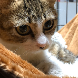 生後3ヶ月ちょっとの可愛コちゃんの女のコです。