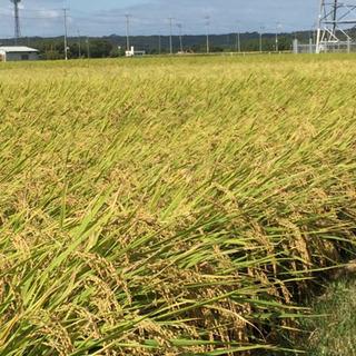 令和元年産  ひのひかり 新米 30kg  玄米 収穫完了です。