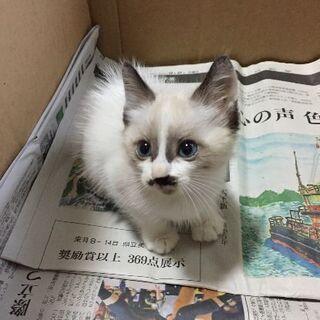 可愛い子猫ちゃん  (里親さん決まりました)