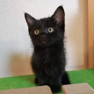 【トライアル中】とっても可愛い黒猫ちゃん♪里親募集休止