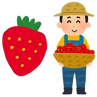 ながた農園(いちご栽培)週2~3日勤務OK