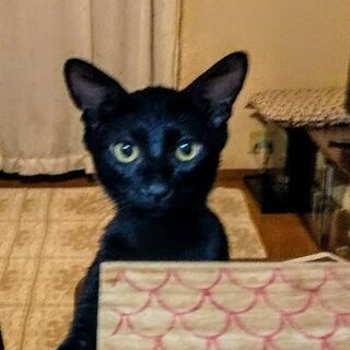 車の中だけで育った黒猫ちゃん。6ヶ月。