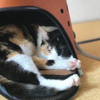 【猫】室内で育ててくださる優しい里親さん募集