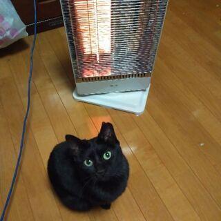 ツンデレ黒猫の女の子です