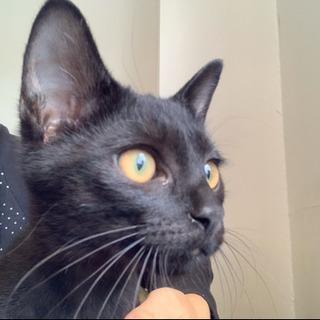 黒猫男の子 4ヶ月 去勢済