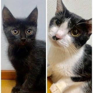 甘えっ子の黒チビとママの親子猫