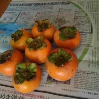 🍊🍊 柿 15個 300円で販売します。