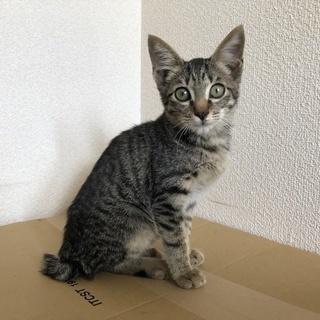 【里親募集】すっごい甘えん坊の子猫です。
