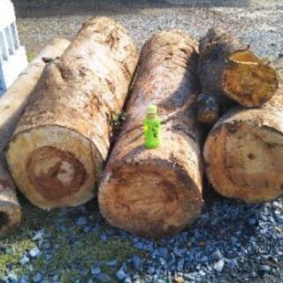 薪や木工に!ケヤキの原木丸太。茨城県潮来市。