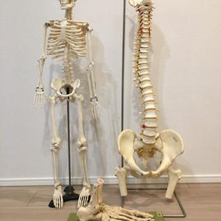 人体模型3点セット