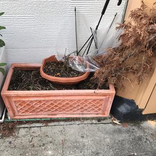 植木 観葉植物 鉢 ②