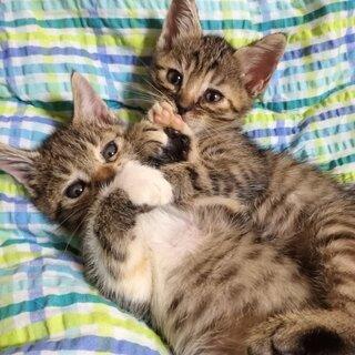 生後約2ヶ月子猫♀ 里親募集