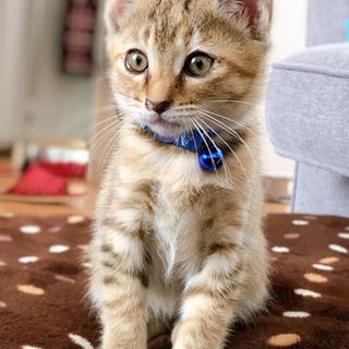 生後2ヶ月半ぐらいの子猫 - 大村市