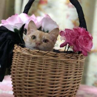 沢山の可愛い子猫達です。